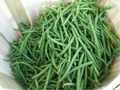 Wholesale Tenergreen Bush Green Bean Seeds