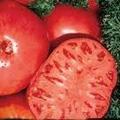 Bulk Brandywine Tomato-500 Seeds-ON SALE1