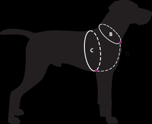 dog-size-guide-bgc2v2.png