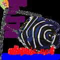 26503  KoreanAngel fish Swimming Fish (26503)