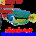 26511  Peacock Wrasse Swimming Fish (26511)