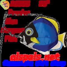 26505  Powder Blue Surgeon Swimming Fish (26505)