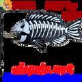 Fish Bones : Swimming Fish (26516)