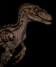 Velociraptor Female by W-Dragon