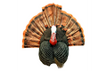 Flextone Thunder Chicken 1/4 Strut Jake/Gobbler Turkey Decoy