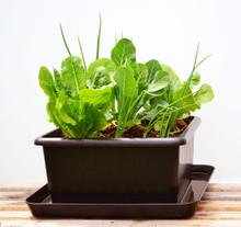 UrBin Grower Self-Watering Growing System 2