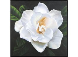Gardenia Wall Art