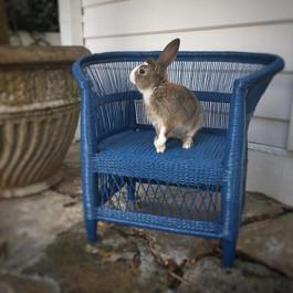 Malawi Chair in Blue