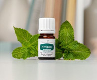 Peppermint Vitality Essential Oil 5 ml - Young Living