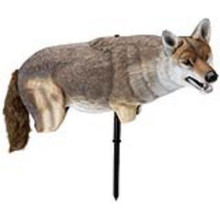 Lucky Duck Yote' Coyote Decoy