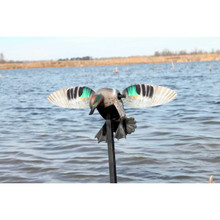 Mojo Elite Greenwing Teal - 816740003962