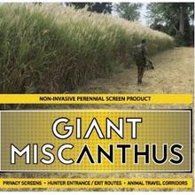 Real World Wildlife Giant Miscanthus 100CT Rhizome - 400001578896