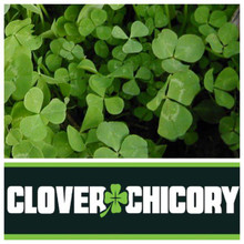 Real World Wildlife RWWP Clover & Chicory - 5lb Jug - 1/2 Acre - 019962361203