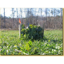 Whitetail Institute Imperial Wintergreens