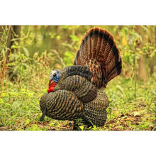 Avian-X LCD Turkey Decoy Tom Strutter