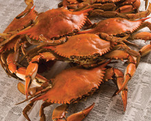 Lousiana Boiled Crabs