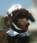 White Dog Sailor Hat & Scarf Costume