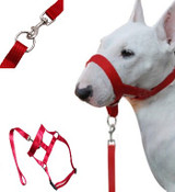 Red Dog Head Collar