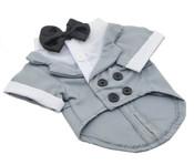 Grey Dog Tuxedo