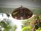 Large copper shade nautical light