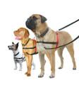 Halti Dog Harness - Small