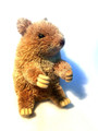 Wombat - Sitting