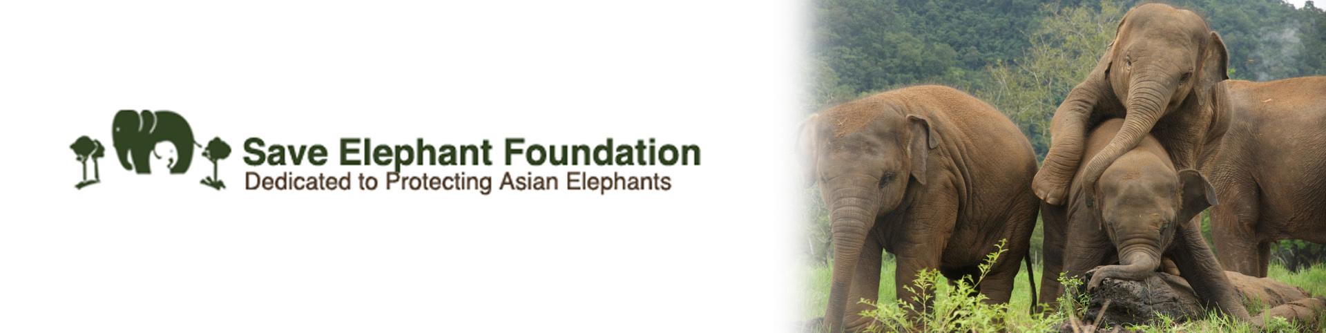 Save the Elephants Foundation