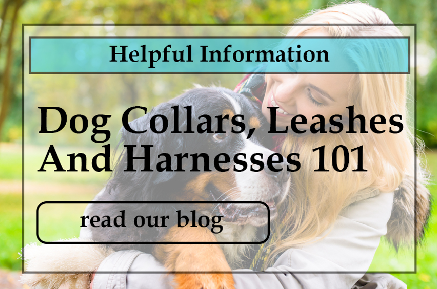 dog-collars-leashes-and-harnesses-101.jpg