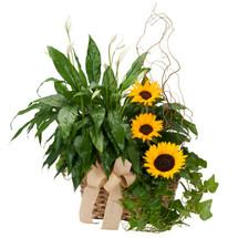 Plants and Sunshine