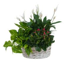 Living Garden Plant Basket