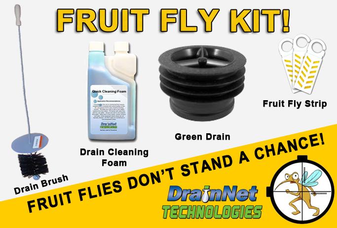 Best way to get rid of fruit flies in a restaurant