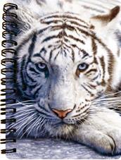 White Tiger Repose