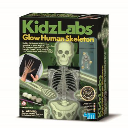 4M - Glow Human Skeleton