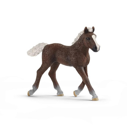 Schleich - Black Forest Foal SC13899 (4059433039589)