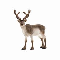 Schleich - Reindeer SC14837