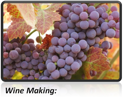wine-making-temp-control-is-critical.jpg