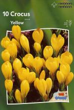 Crocus Yellow 10_bulbs