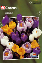 Crocus mixed colors 20_bulbs