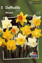 Daffodil Mixed mixed colors 5_bulbs