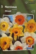 Narcis Mixed colors 5_bulbs