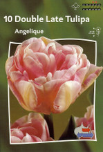 Tulip Angelique pale pink 10_bulbs
