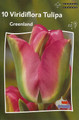 Tulip Greenland green red edge 10_bulbs