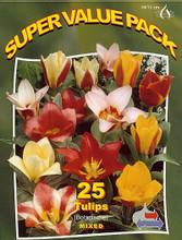 Tulips botanical mix 25_bulbs