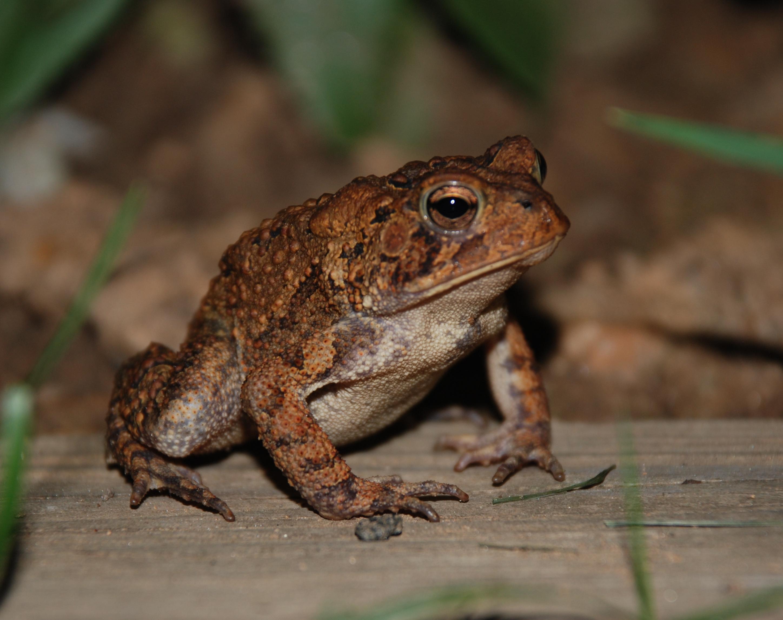 Everglades Invasive Reptile and Amphibian Monitoring Program   The ...