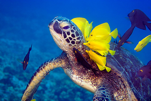 Flitto Content - [ World Water Day ] Marine animals endangered