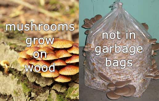 Buy mushrooms grown on wood.