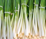 Onion Bunching He Shi Ko Organic Allium Cepa Seeds