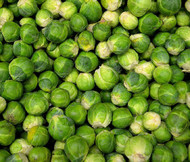 Brussel Sprouts Long Island Brassica Oleracea Seeds