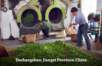 Organic Tea from Jiangxi Province, China