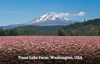 Trout Lake Farm, Washington, USA